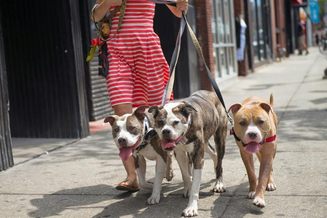 camminare-con-cani-in-città